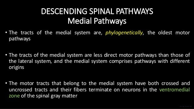 DESCENDING SPINAL PATHWAYS Medial Pathways • The tracts of the medial system are, phylogenetically, the oldest motor pathw...