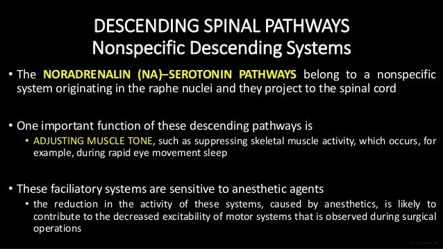 DESCENDING SPINAL PATHWAYS Nonspecific Descending Systems • The NORADRENALIN (NA)–SEROTONIN PATHWAYS belong to a nonspecif...
