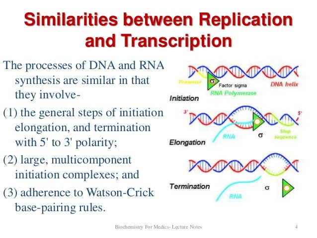 Dna Transcription Part1 on Transcription And Translation Worksheet Answers