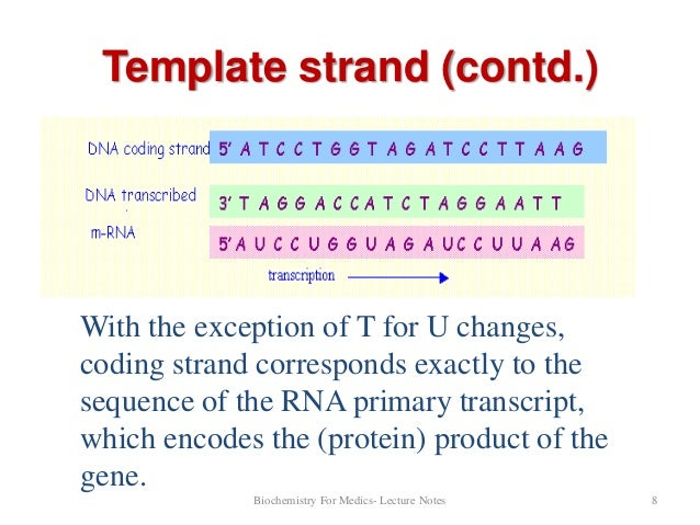 Solved 23 transcribe the following sequence of dna locat for What is a template in dna