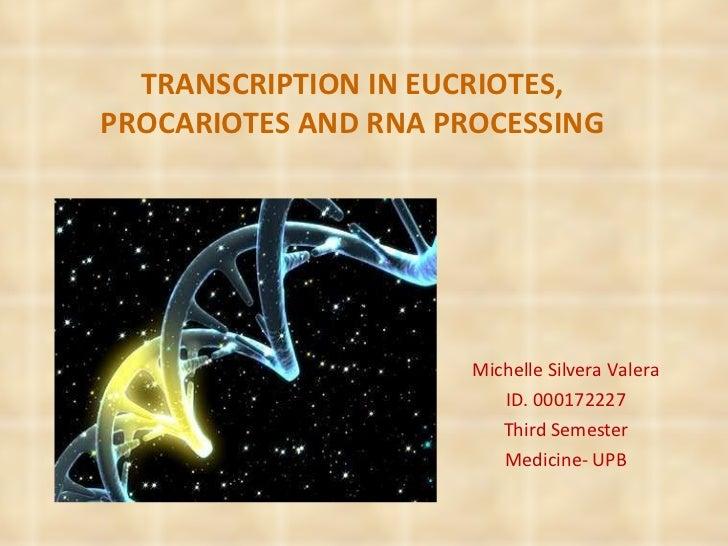 TRANSCRIPTION IN EUCRIOTES, PROCARIOTES AND RNA PROCESSING Michelle Silvera Valera ID. 000172227 Third Semester Medicine- ...
