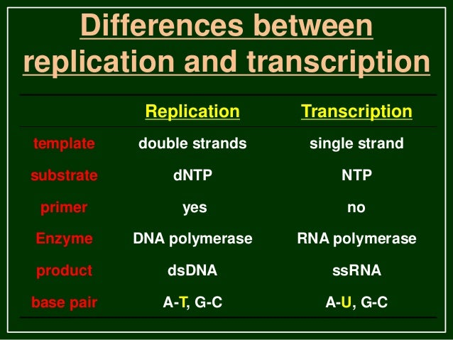 Transcription in eukaryotes for Difference between template and coding strand