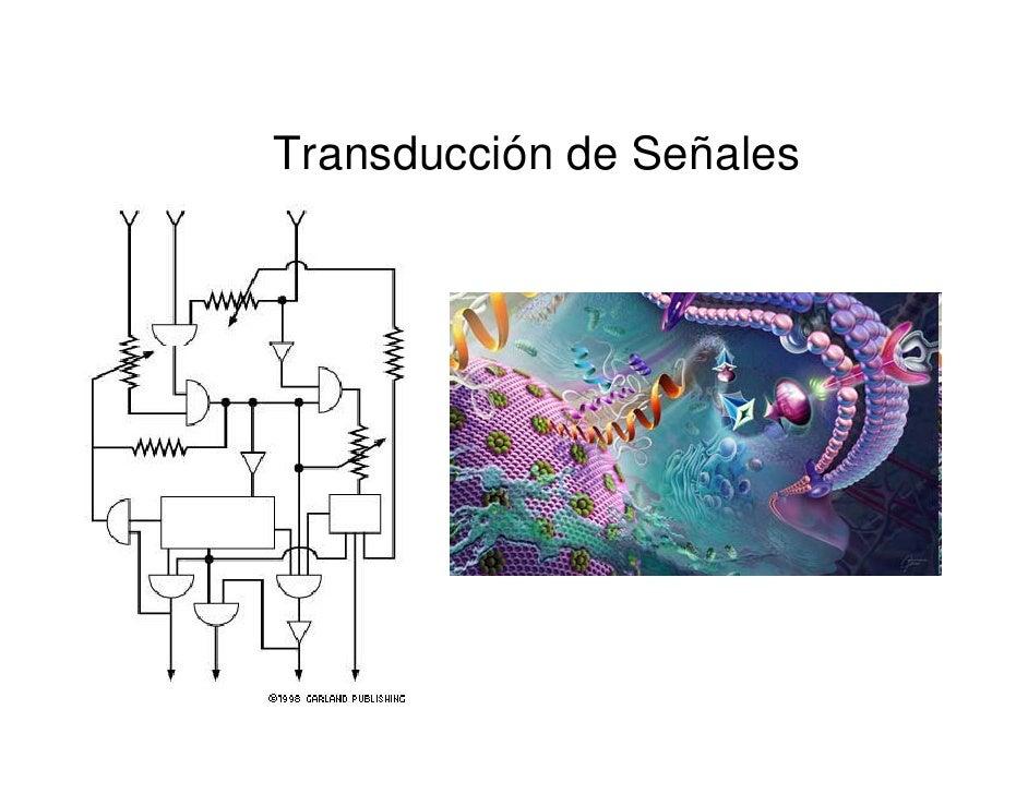 Transducción de Señales