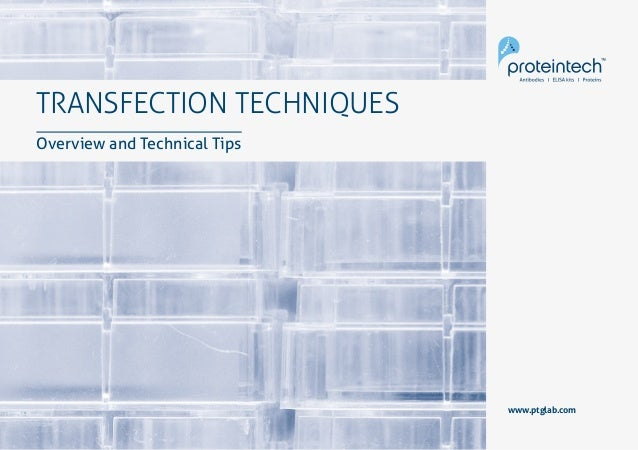 1Transfection TRANSFECTION TECHNIQUES Overview and Technical Tips www.ptglab.com