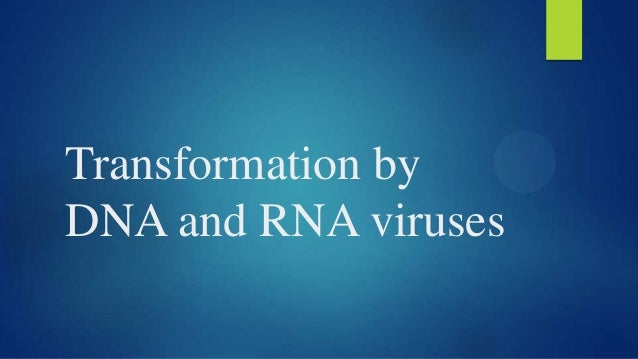 Transformation by DNA and RNA viruses