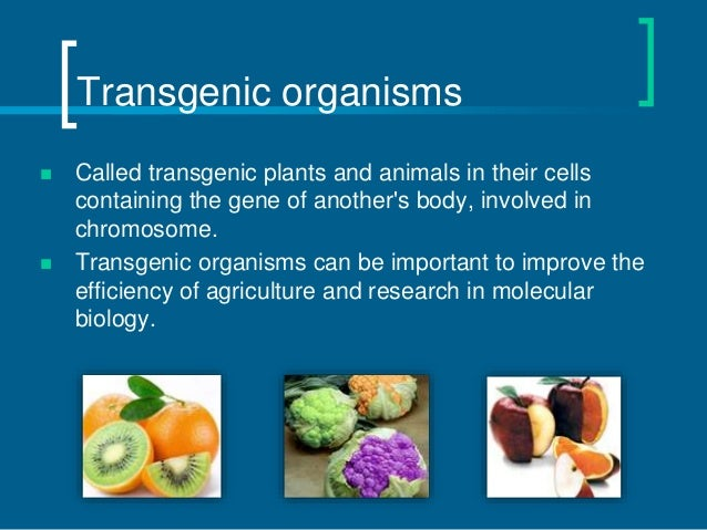 transgenic animals and plants Transgenic plants for molecular farming many plant products useful for humans such as sugars, fatty acids, starches, celluloses, rubber, and wax are obtained by using the traditional methods the efforts are going on to use genetic engineering to increase their production.