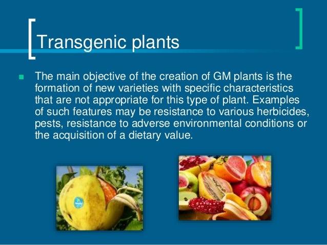 Transgenic and chimeric organisms (GMO)
