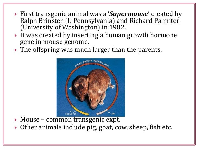  First transgenic animal was a 'Supermouse' created by Ralph Brinster (U Pennsylvania) and Richard Palmiter (University o...