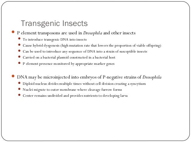 Transgenic Insects  P element transposons are used in Drosophila and other insects  To introduce transgenic DNA into ins...