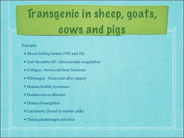 Transgenic animals