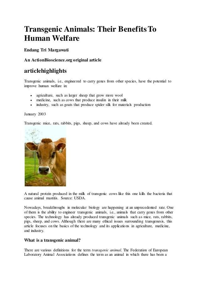 transgenic race content articles 2011