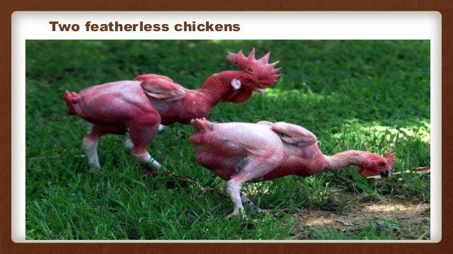 Transgenic animals (1)