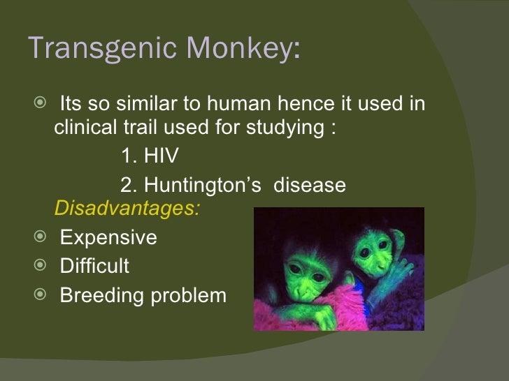 Transgenic Monkey: <ul><li>Its so similar to human hence it used in clinical trail used for studying : </li></ul><ul><li>1...
