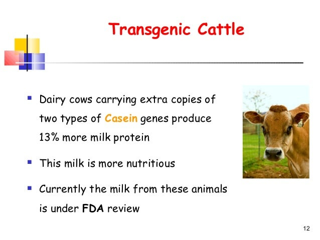 Research paper on transgenic animals