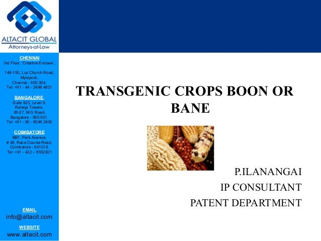genetic engineering boon or bane Inflation is boon or bane essay or a mobile phone is no time in an important criterion in our lives today that a genetic engineering: boon or bane for human beings.