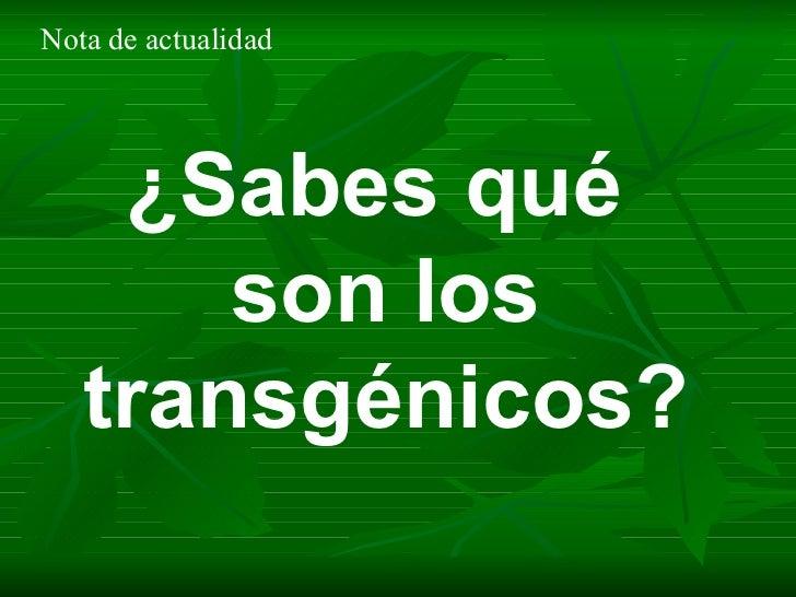 ¿Sabes qué  son los transgénicos? Nota de actualidad