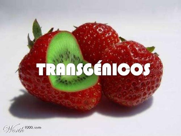 ¿QUÉ SON LOS         TRANSGENICOS?• Los alimentos transgénicos son aquellos que  fueron producidos a partir de un organism...
