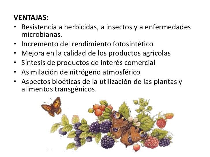 Transgenicos expo - Ventajas alimentos transgenicos ...