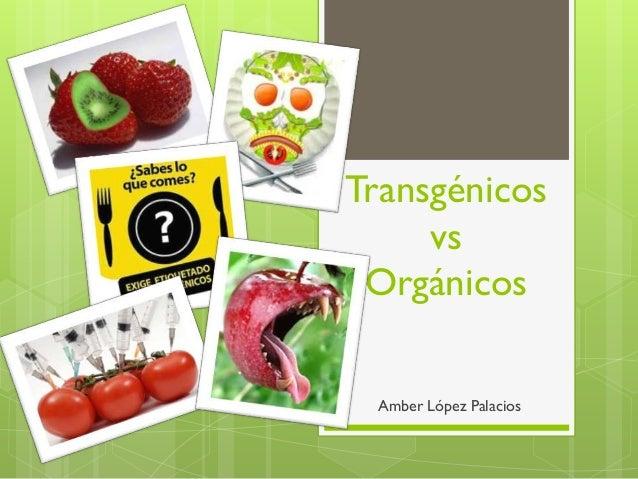 Transgénicos     vs Orgánicos Amber López Palacios