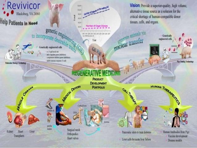 xenotransplantation pros and cons list