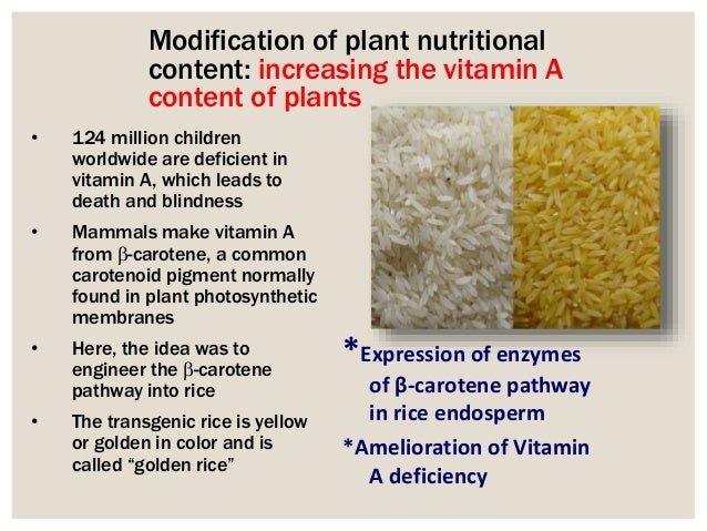 transgenic rice plants Essay for centuries, rice has been one of the most important staple crops for the world and it now currently feeds more than two billion people, mostly living in.