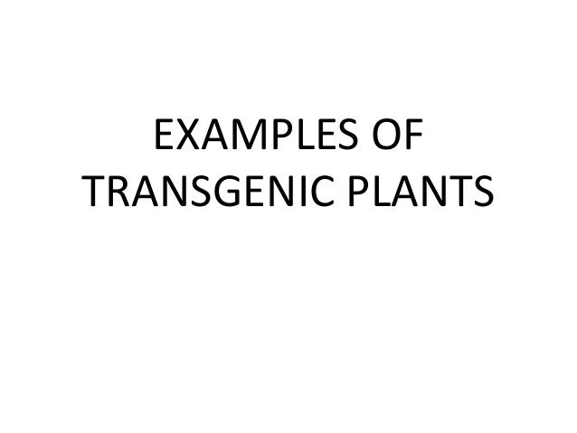 transgenic species essay The transgenic cows are an example of transgenic animals as a transgenic animal, the transgenic cows have the extra gene (transgene) present in every cell, but it's only expressed in.