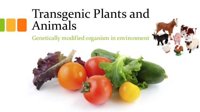Transgenic Plants and Animals Genetically modified organism in environment