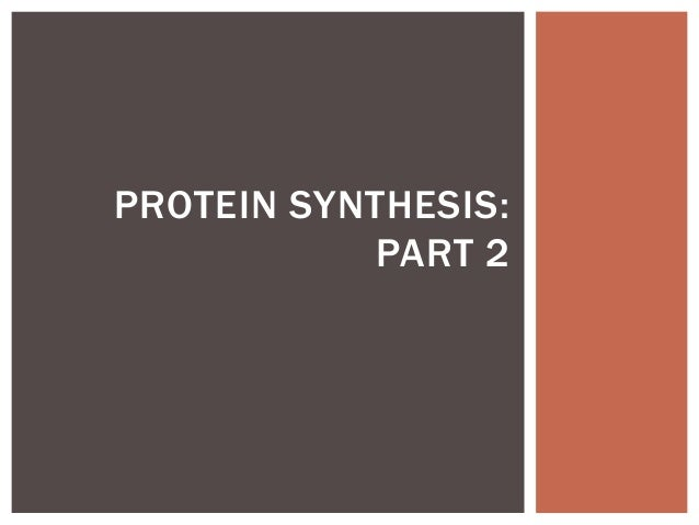 PROTEIN SYNTHESIS:           PART 2