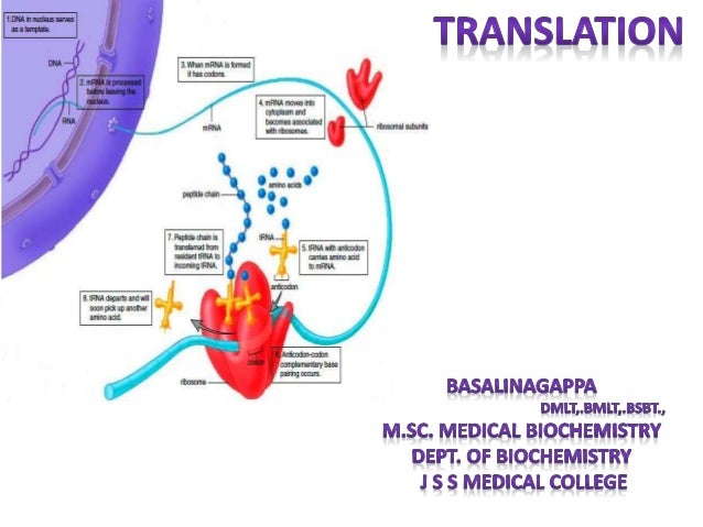 translation and post translational modifications 1 638?cb=1479294265 translation and post translational modifications
