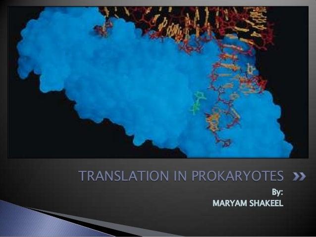 TRANSLATION IN PROKARYOTES By: MARYAM SHAKEEL