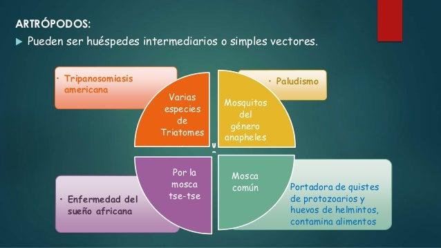 AGUA: Importante para el desarrollo y ciclo evolutivo de numerosos parásitos. Ingerida siendo impura transmite quistes, hu...
