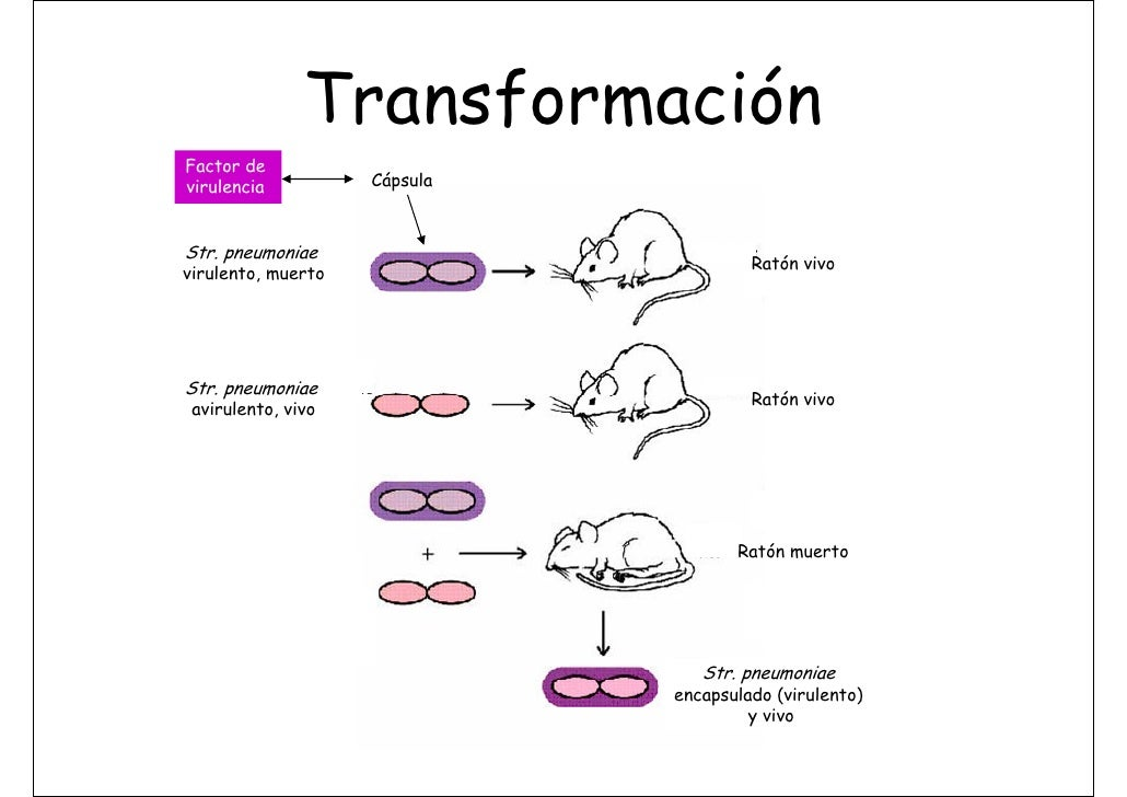 TransmisióN De La InformacióN GenéTica