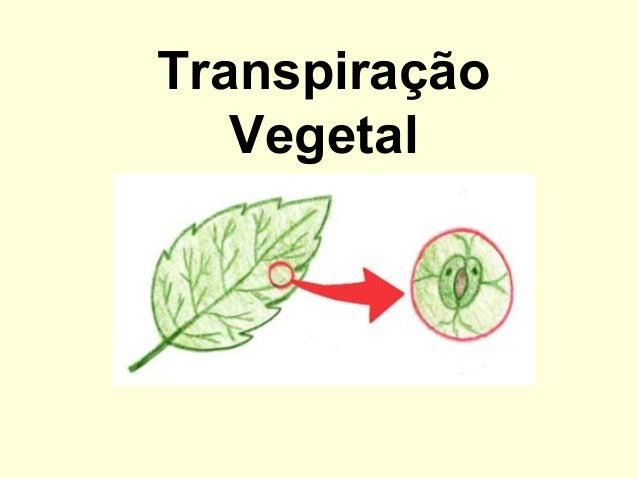 TranspiraçãoVegetal