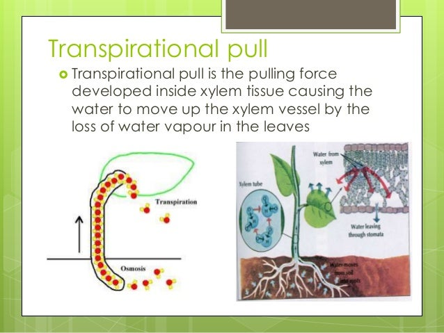 significance of transpiration in plants pdf
