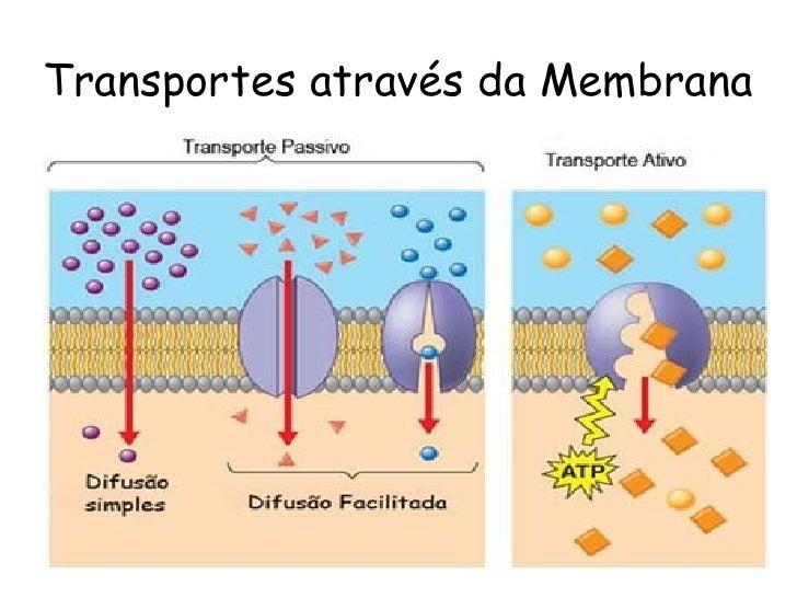 transporte em membrana Las células se encuentran en contacto con el medio e interactúan con él a través de la membrana citoplasmática este contacto se verifica por el ingreso de.