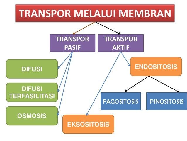 Transpor membran ccuart Choice Image