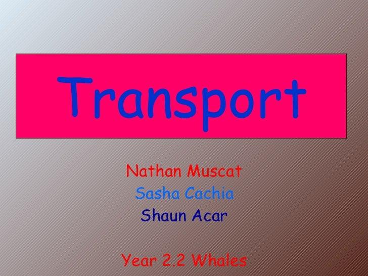 Nathan Muscat Sasha Cachia Shaun Acar Year 2.2 Whales Transport