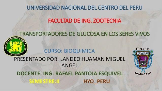UNIVERSIDAD NACIONAL DEL CENTRO DEL PERU FACULTAD DE ING. ZOOTECNIA TRANSPORTADORES DE GLUCOSA EN LOS SERES VIVOS CURSO: B...