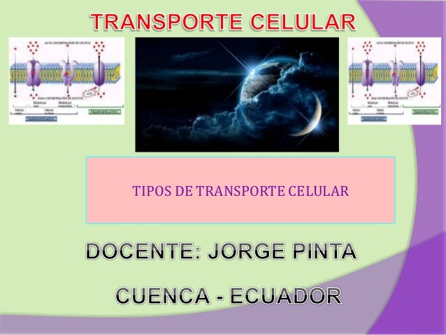 TIPOS DE TRANSPORTE CELULAR