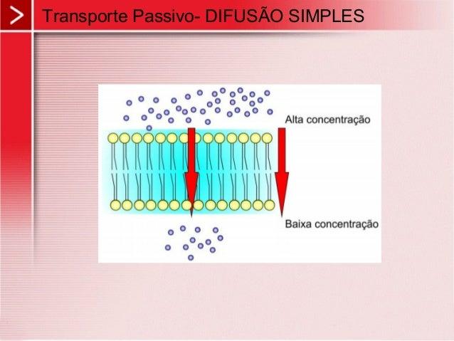 transporte em membrana Homeostasis y transporte a traves de membrana: homeostasis:  en todos los organismos, los diversos procesos metabólicos deben ser.