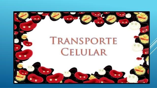 A membrana celular é uma estrutura semipermeável, ou seja, com permeabilidade seletiva. Essa característica permite que a ...