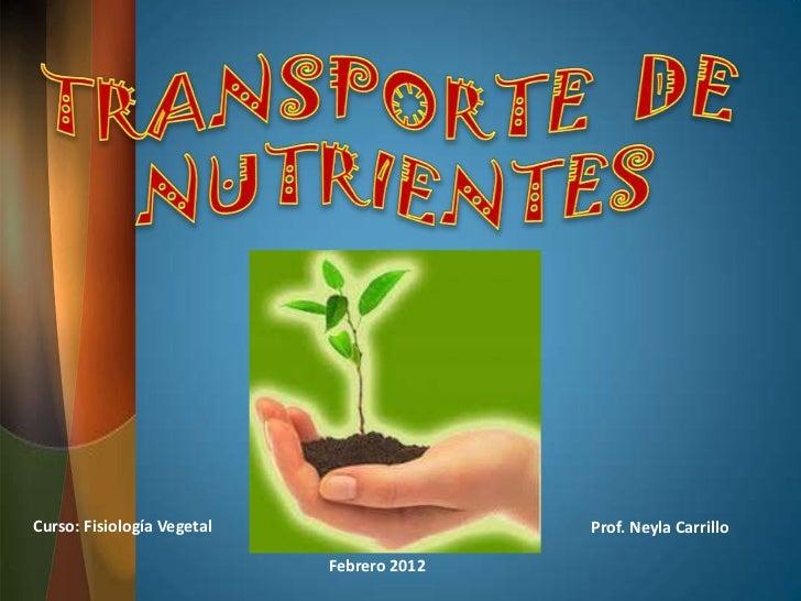 Curso: Fisiología Vegetal                  Prof. Neyla Carrillo                            Febrero 2012
