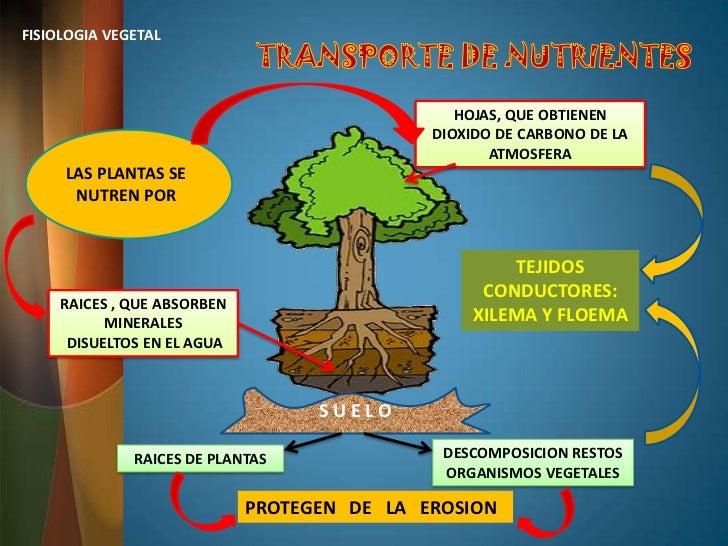 Encantador Definir Anatomía De La Planta Colección de Imágenes ...