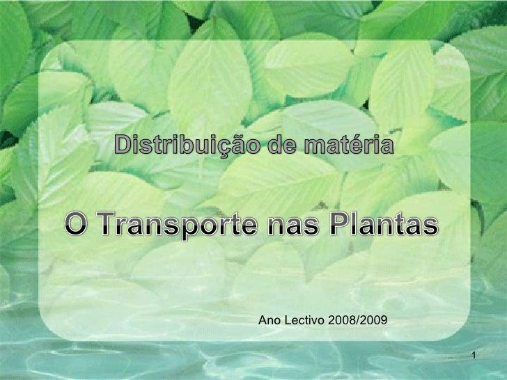 Ano Lectivo 2008/2009