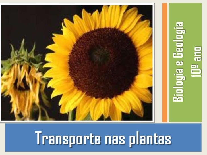 Transporte nas plantas                         Biologia e Geologia                               10º ano