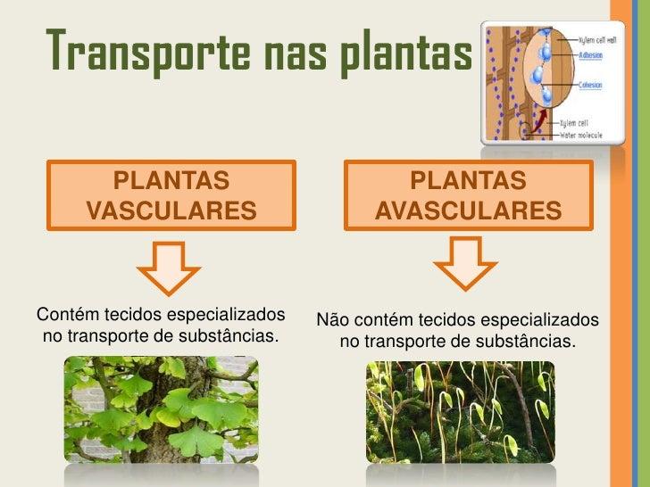 transporte nas plantas plantas plantas vasculares avascularescontém