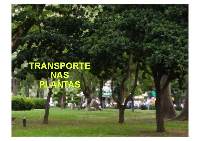SISTEMAS DE TRANSPORTE – PLANTAS VASCULARES RAÍZ CAULE FOLHA FUNÇÕES FOTOSSÍNTESE SUSTENTA AS FOLHAS TRANSPORTE DAS SEIVAS...