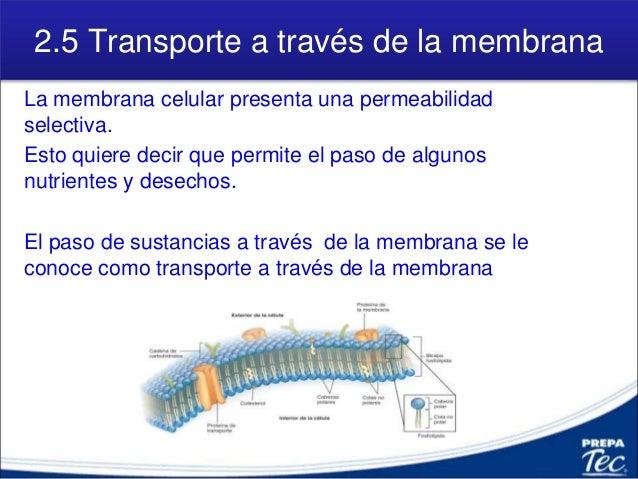 2 5 Transporte A Través De Membrana