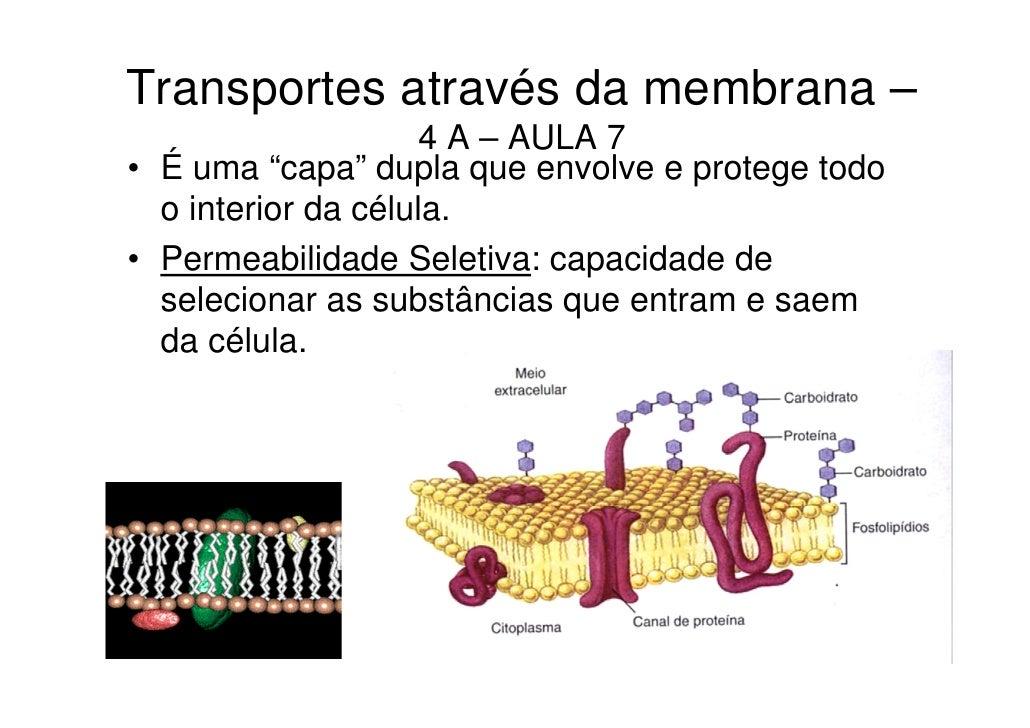 """Transportes através da membrana –                     4 A – AULA 7• É uma """"capa"""" dupla que envolve e protege todo  o inter..."""