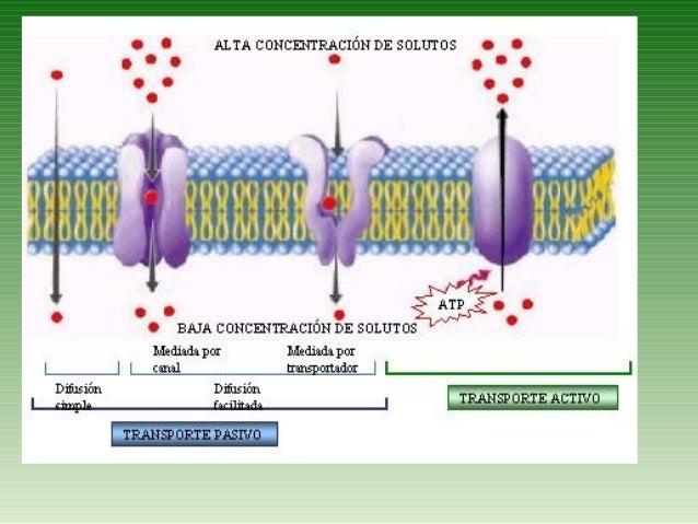 Transporte Y Membrana Celular
